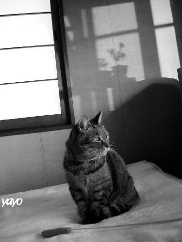 PHOTO011-b.JPG